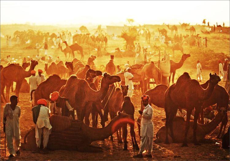 Rajasthan pushkar fair