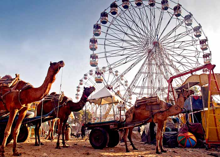 Rajasthan pushkar fair