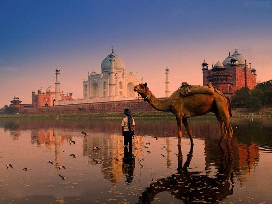 Taj Mahal with Camal