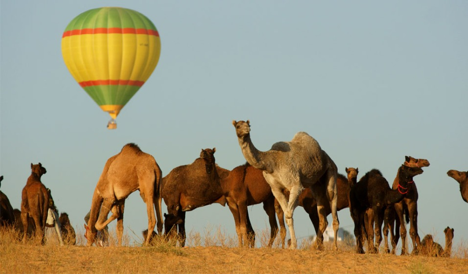 Hot Air Balloon Ride in The land of kings! Rajasthan
