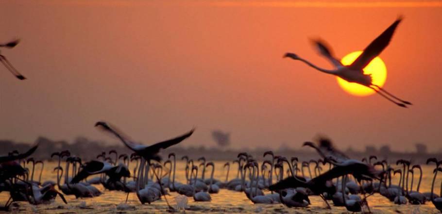 Gujarat Wilds Tour