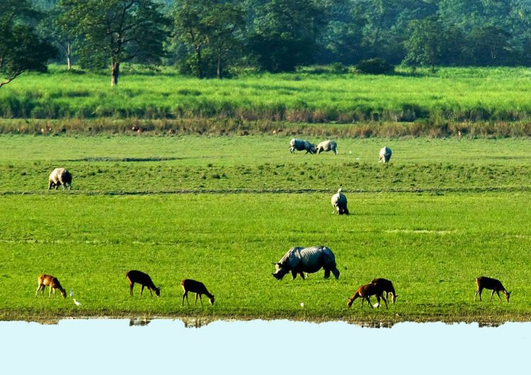 kaziranga Travel Tips