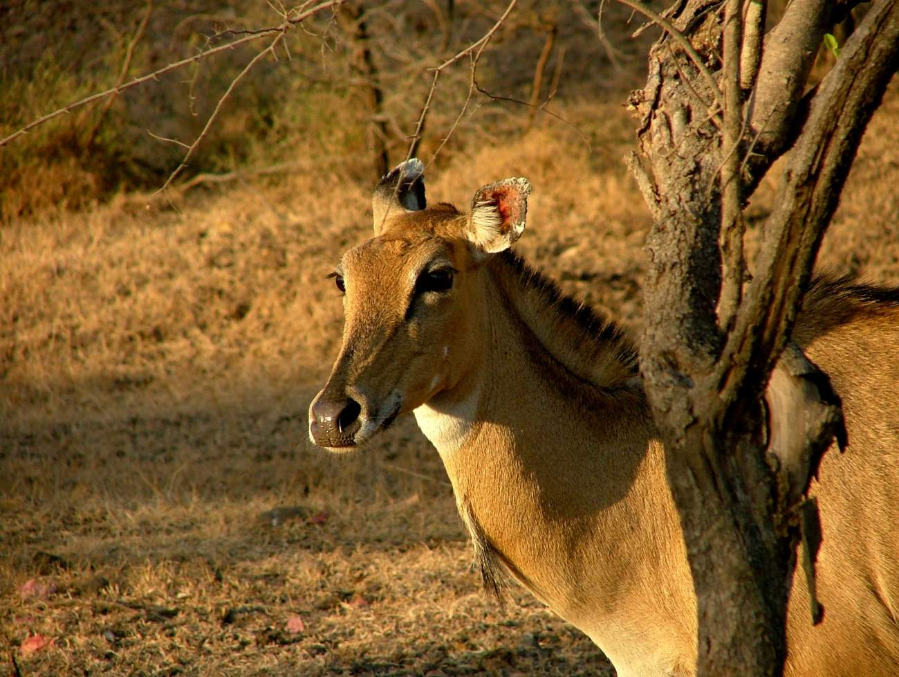 Blackbuck National Park