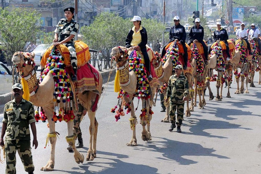 Camel Safari at Dogs