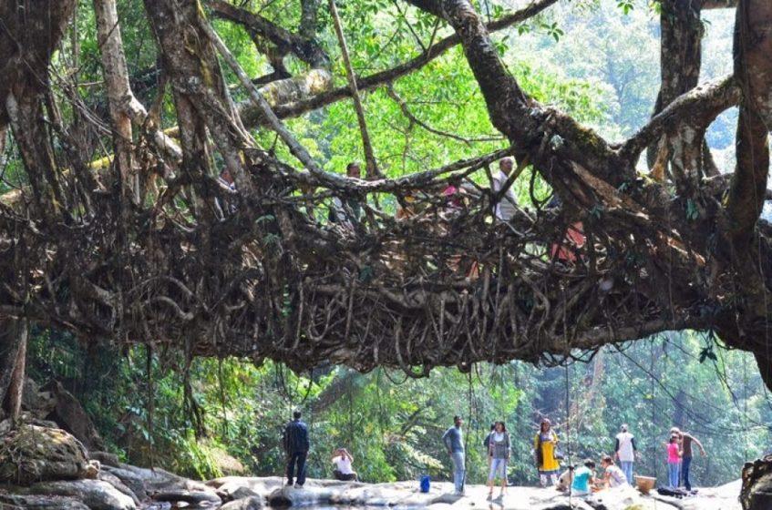Living-Roots-Bridge--Cherrapunji-Meghalaya