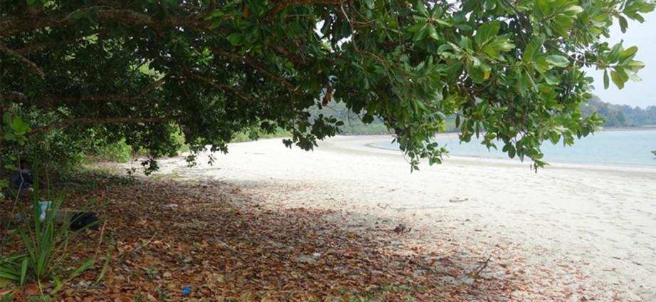 Pathi Level Beach, Diglipur